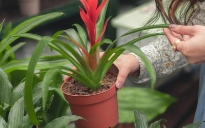 How Digital Marketing Boosts Your Plant Sales