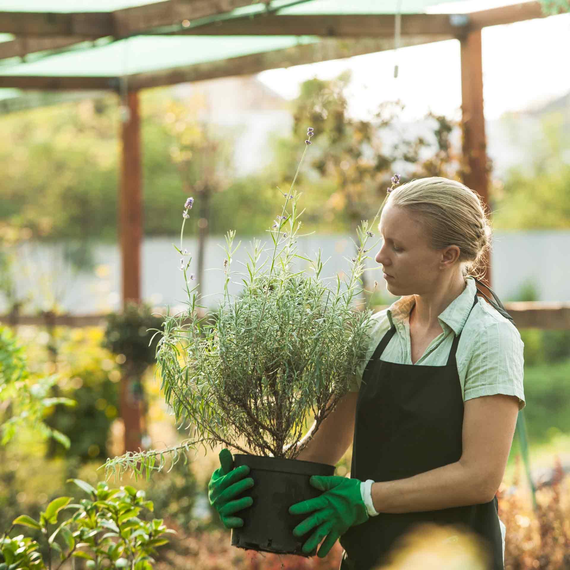 female garden center employee holding shrub
