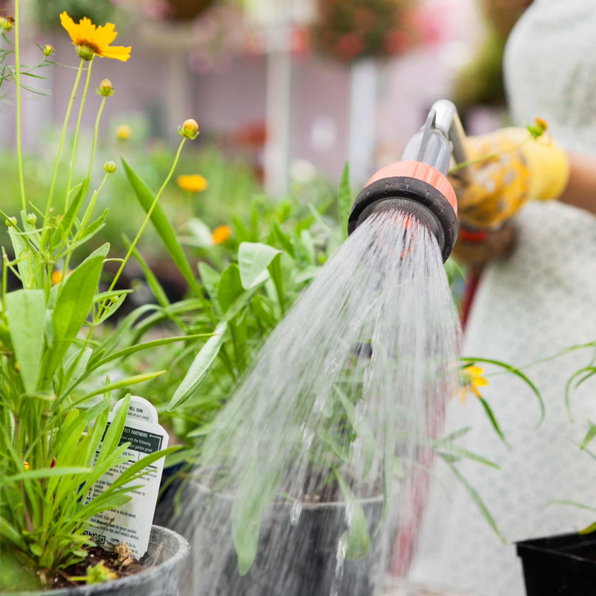 watering plants in greenhouse